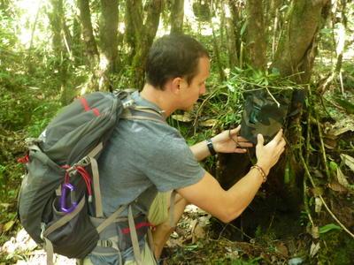 Wolontariusz montuje na drzewie aparat do fotografowania zwierząt