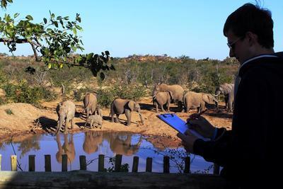Wolontariusz identyfikuje słonie na projekcie ochrony środowiska w Botswanie.