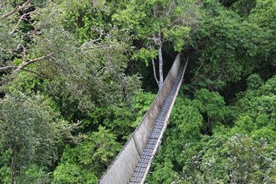 Canopy walkway at the Conservation Project in Peru