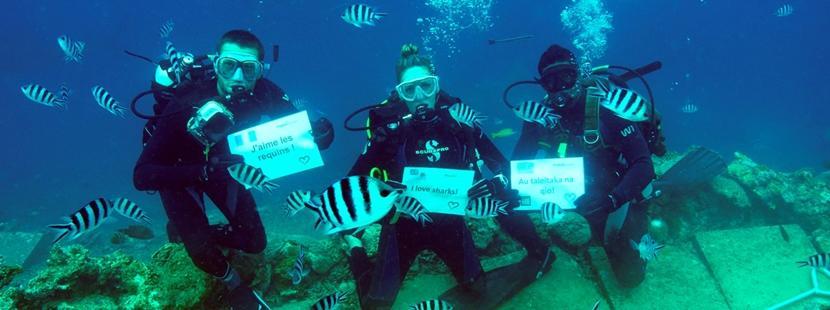 Wolontariusze nurkują. Projekt ochrony rekinów na Fidżi