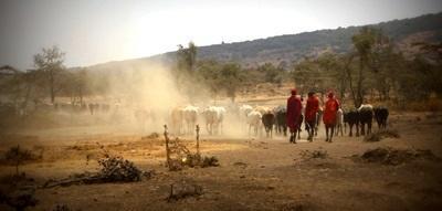 Volunteering with traditional maasai community in Tanzania