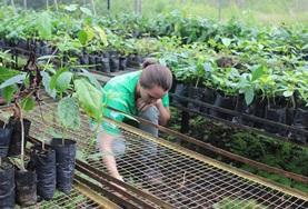 Volunteer Ochrona środowiska <br /> naturalnego