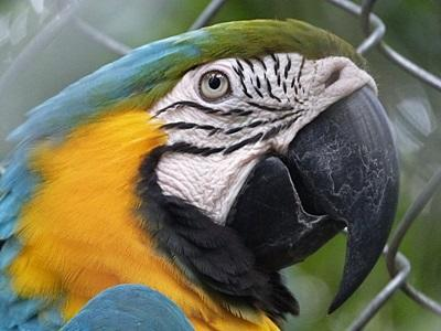 Parrot on the site of the Conservation project in the Amazon Rainforest in Peru