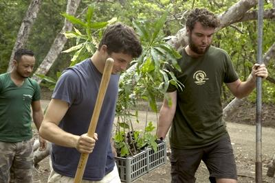 Projects Abroad volunteers move trees to be planted as part of a reforestation project in Costa Rica
