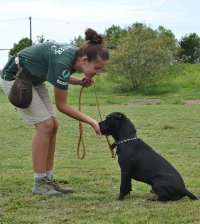 Wolontariuszka uczy psa podawać łapę, Argentyna.