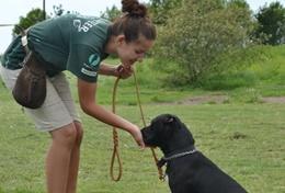 Volunteer Weterynaria & Opieka <br /> nad zwierzętami