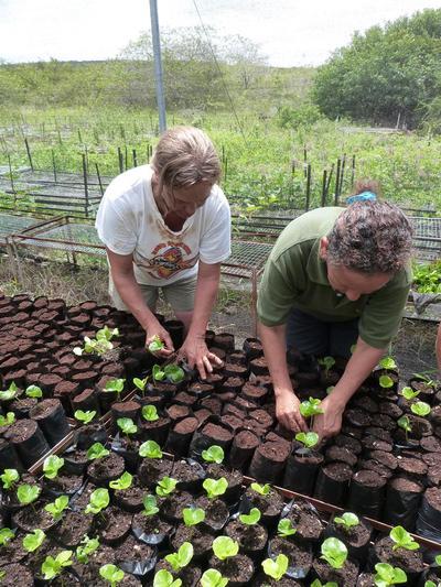Wolontariusze podczas wolontariatu w Ekwadorze dbają o sadzonki